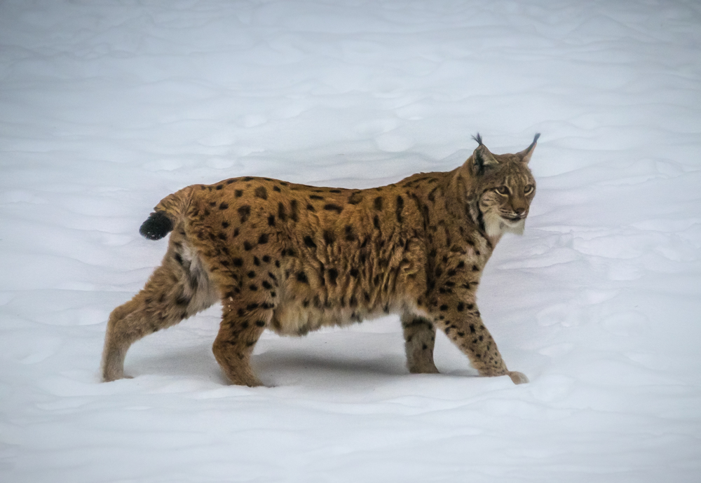 Zoogdieren-5